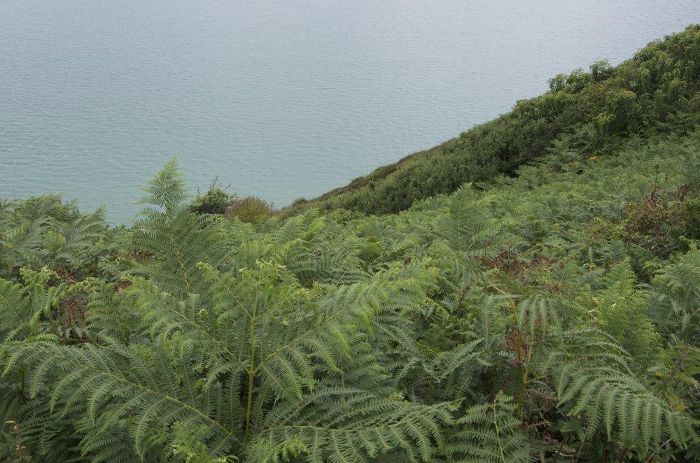 Fougères vers la mer, Pointe du Roselier