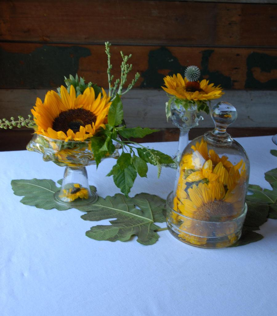 Urban Botanical 003 email.jpg