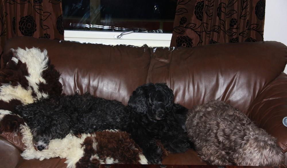 full sofa.jpg