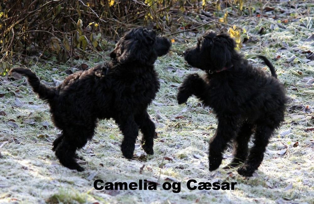 camelia og alfred danser.jpg