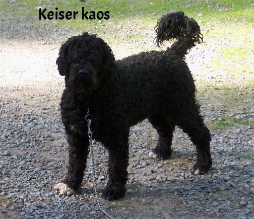 Isostar's Keiser Kaos.jpg