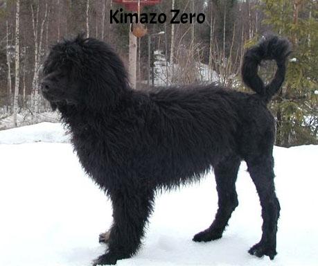 kimazo Zero.jpg