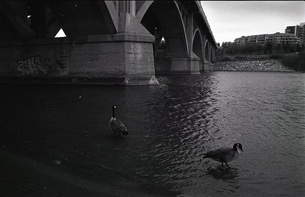 119 [F] Pentax K1000 - Kodak Tri-X @ 1600 - 028.jpg