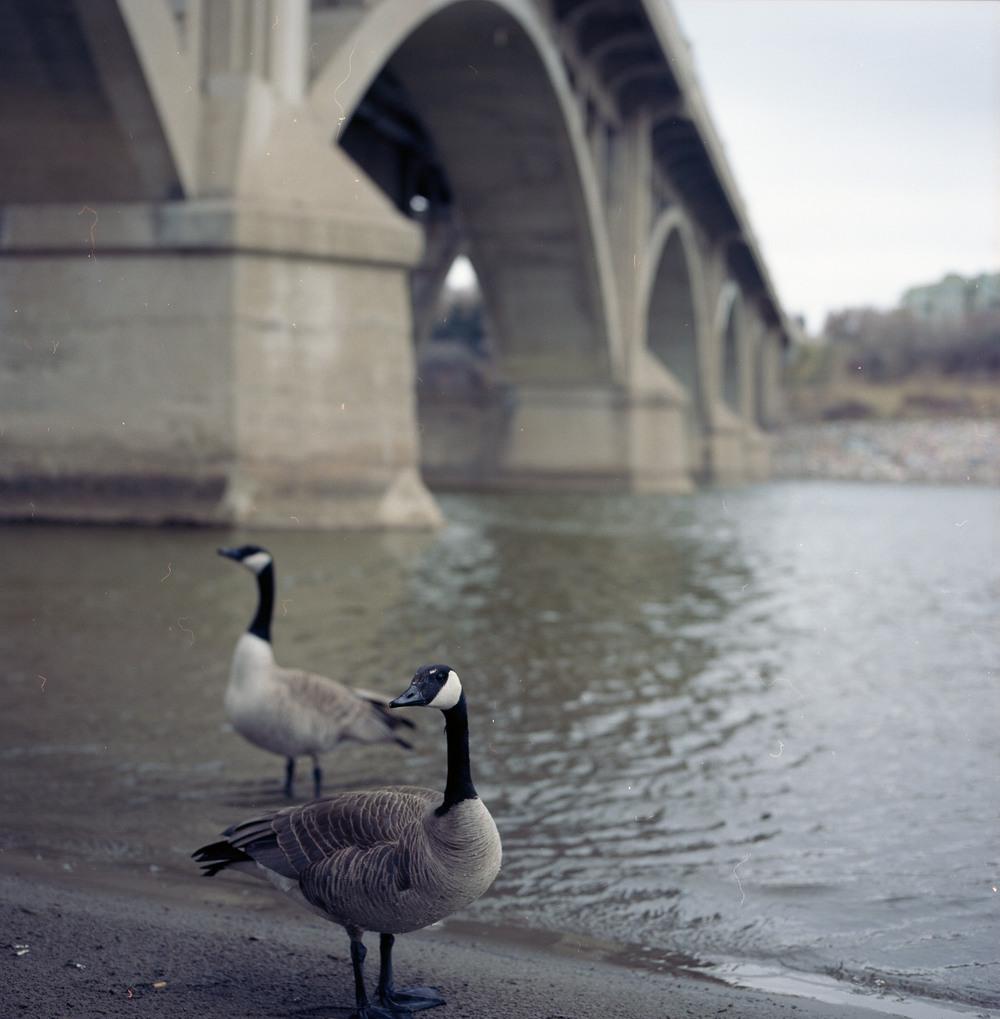 122 [F] Hasselblad 500CM - Kodak Portra 160 @ 640 - 017.jpg