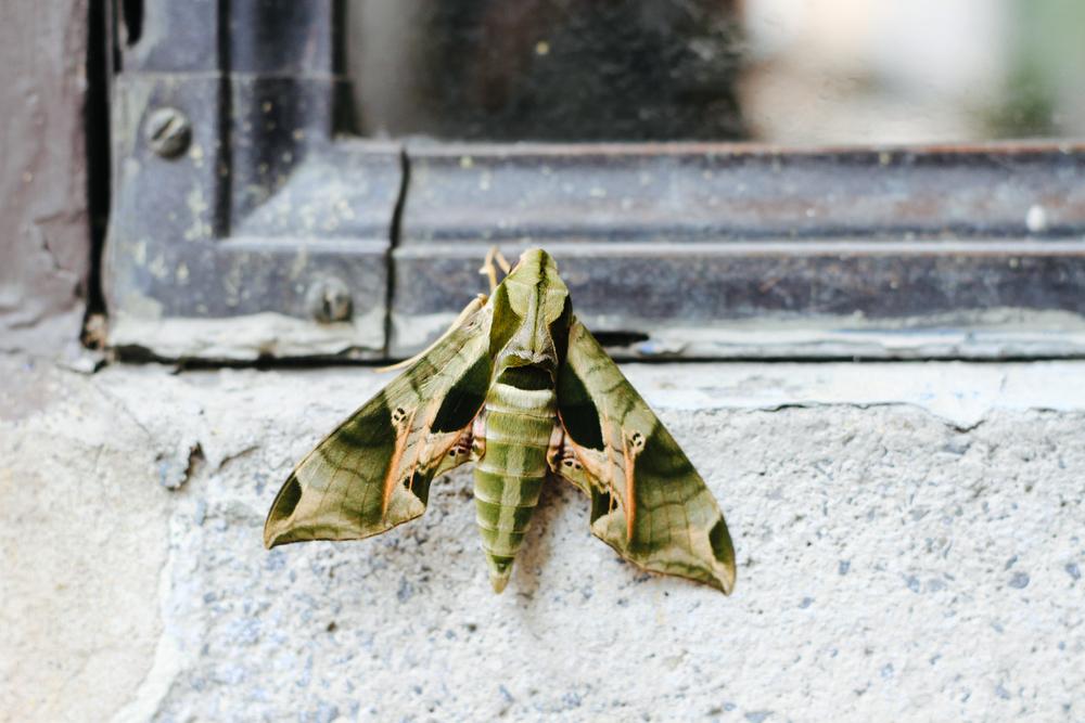 moth-7115.jpg