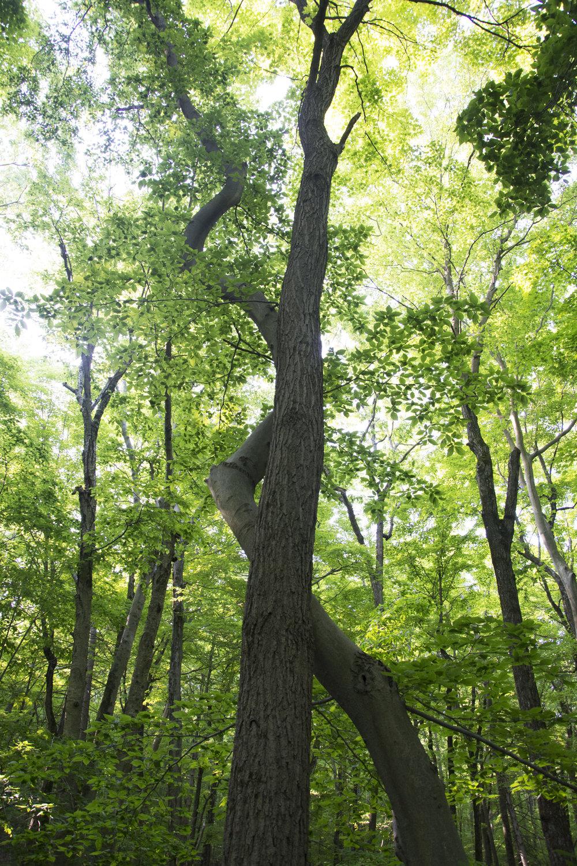 tree_hug_E159238.jpg