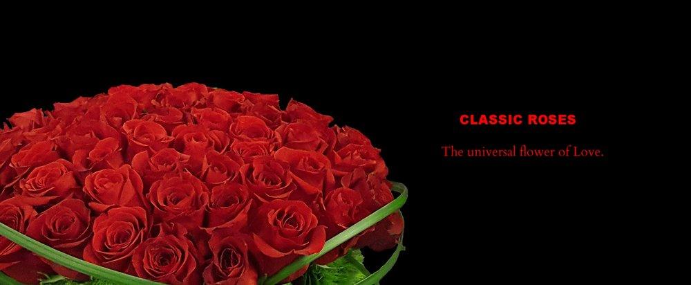 Banner rose.jpg