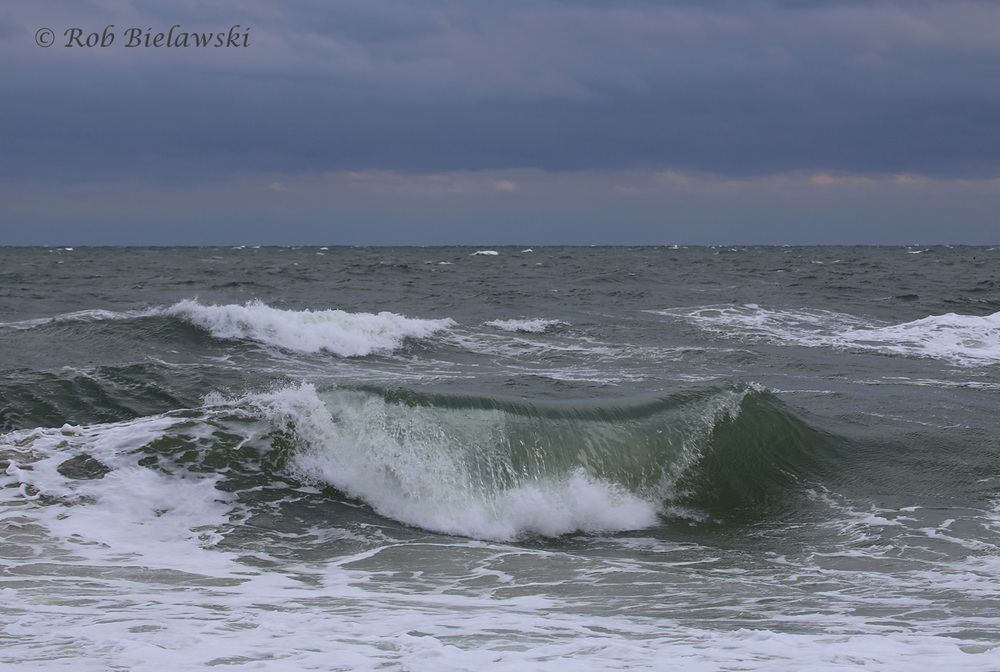 A coastal storm (aka Nor'easter) sliding up the East Coast over the weekend seen at Back Bay NWR!