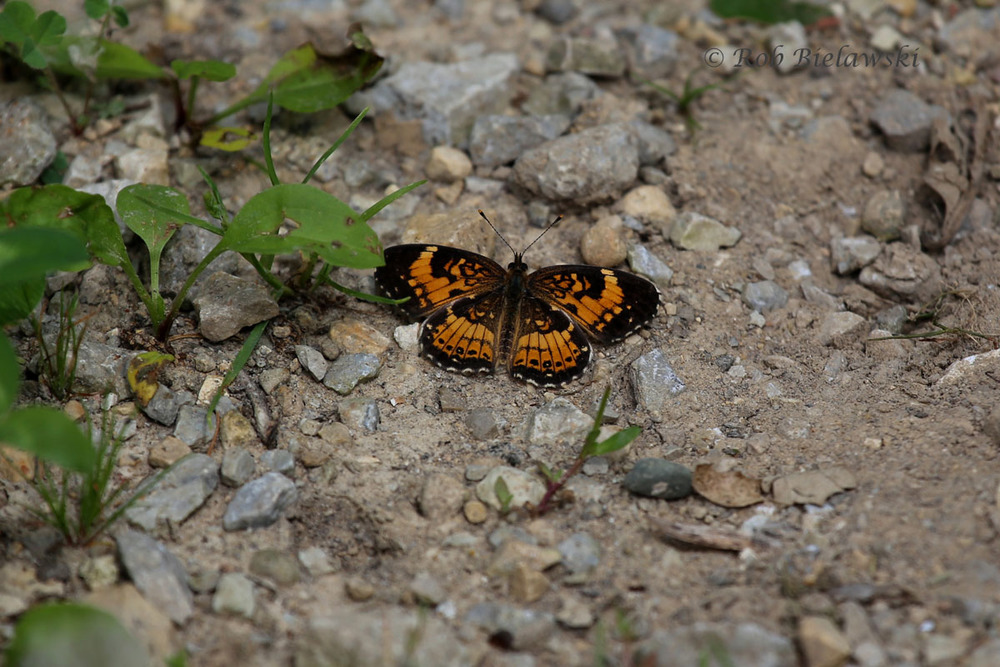 Unknown species of butterfly/moth at Plum Creek Nature Preserve.