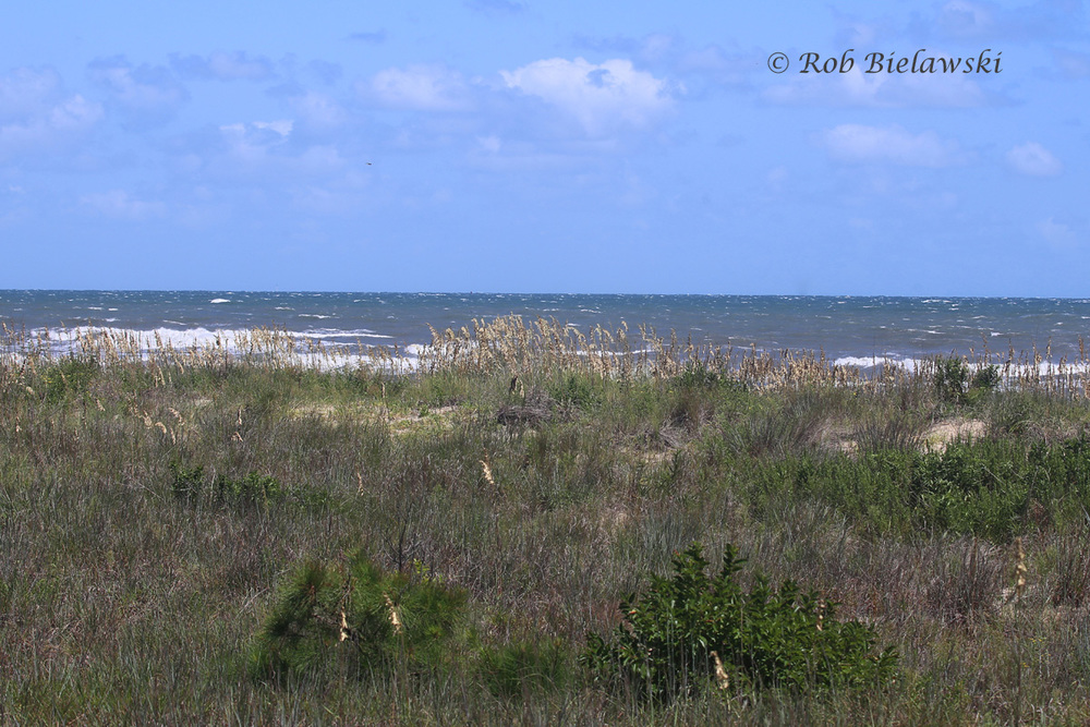 The view from 64th Street out over the Atlantic Ocean, very churned up from northeasterly winds.
