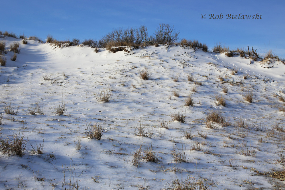 Snow & ice along the dunes at Back Bay National Wildlife Refuge on Saturday morning!