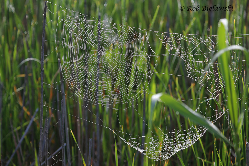 An intricate spider's web shows up thanks to foggy weather which left moisture all across the thin webbing!
