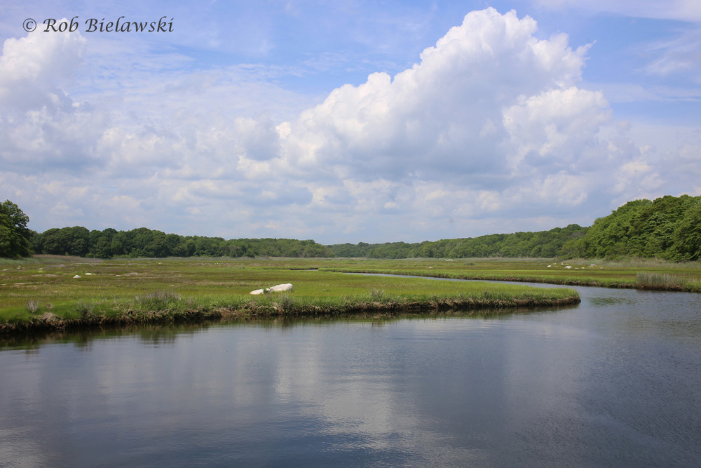 The tidal estuaries of Barn Island Wildlife Management Area in eastern Connecticut!