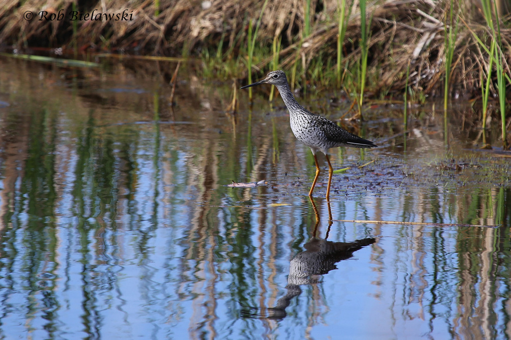 9 May 2015 - Back Bay NWR, Virginia Beach, VA