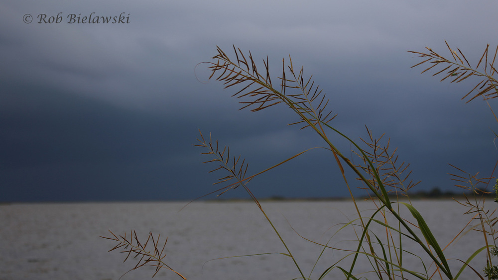 The ominous clouds approaching me early on Saturday morning at Back Bay NWR!