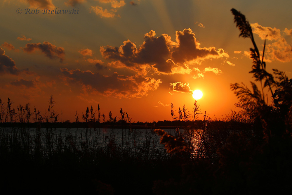 A beautiful October sunset at Back Bay NWR on Tuesday evening!