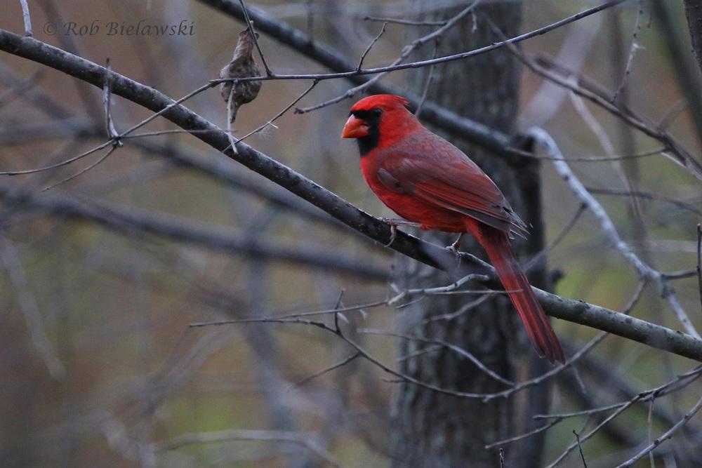 7 Nov 2015 - Huntley Meadows Park, Fairfax County, VA
