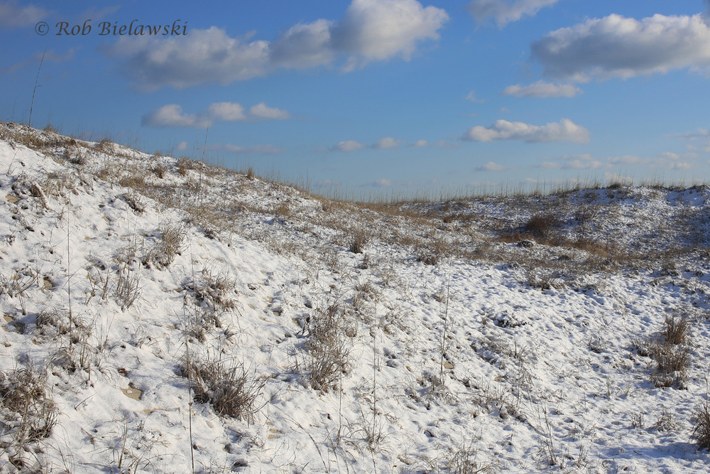 The interior dunes of Back Bay NWR were blanketed by snow from Friday evening through Saturday afternoon!