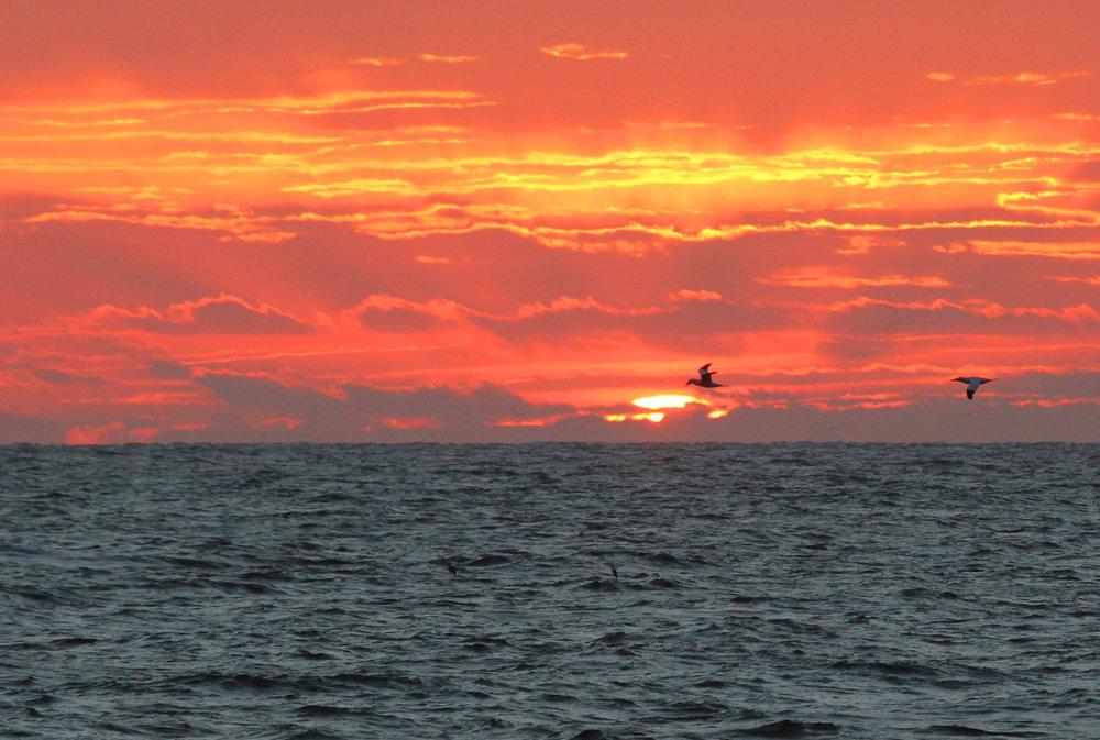 Sunrise / 17 Feb / Little Island Park