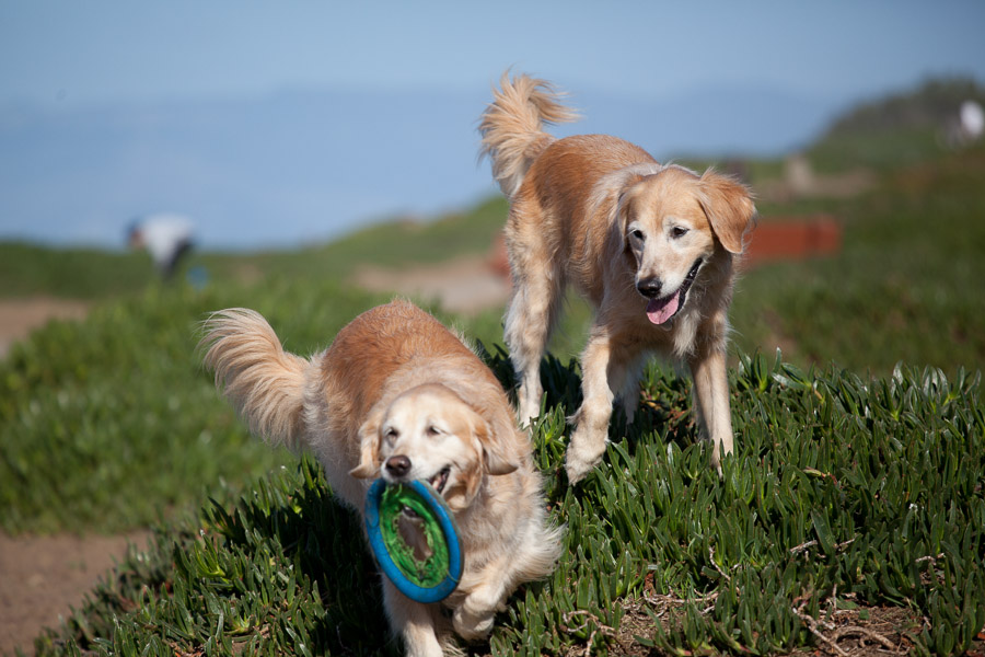 pet-photographer-santa-barbara-stitch-1