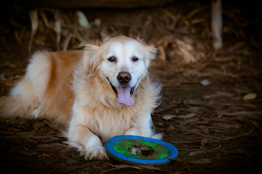 pet-photographer-santa-barbara-stitch-3