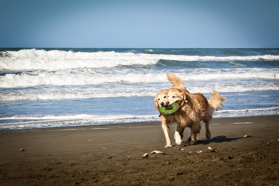 pet-photographer-santa-barbara-stitch-4