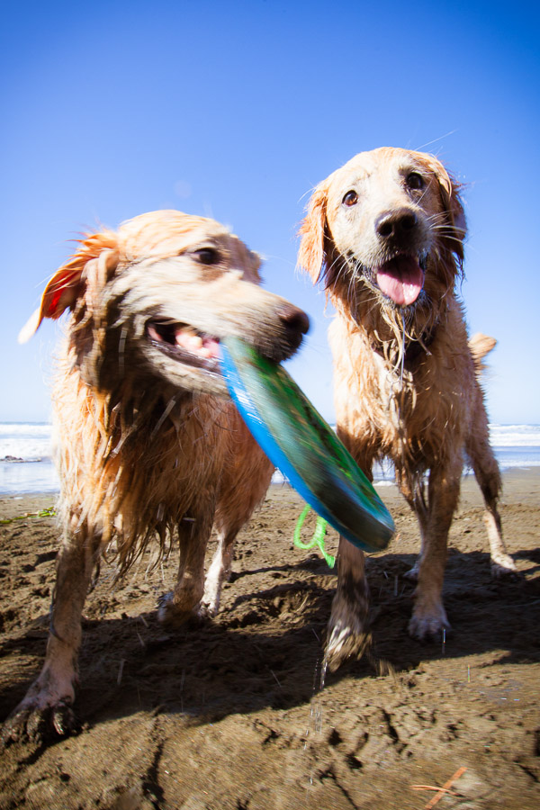 pet-photographer-santa-barbara-stitch-5