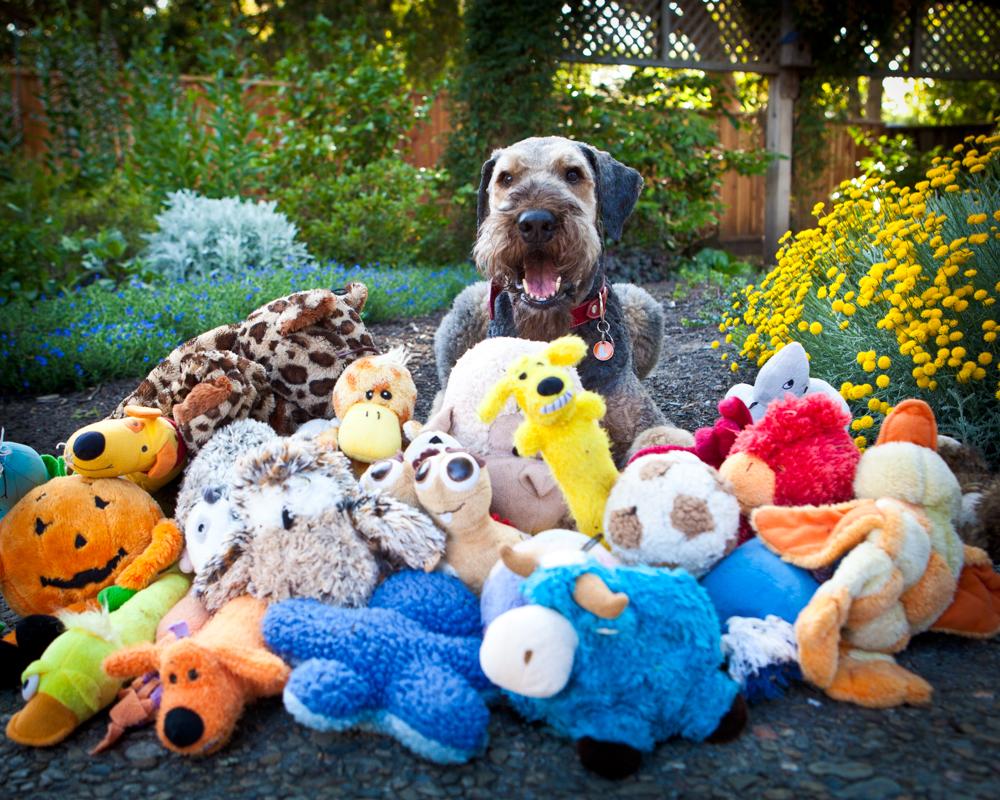 So many toys!!
