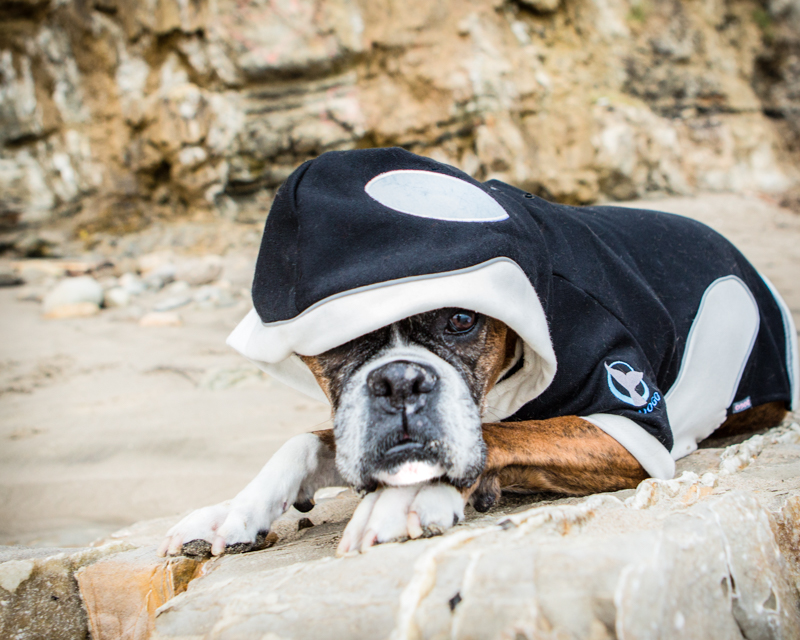 Uma looking ferocious as an orca.