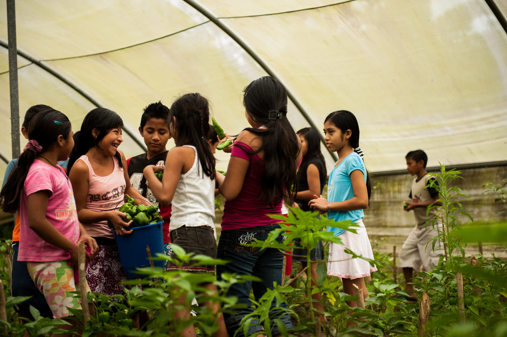 Casa-Guatemala_Children-Picking-Vegetables-on-the-Farm.jpg