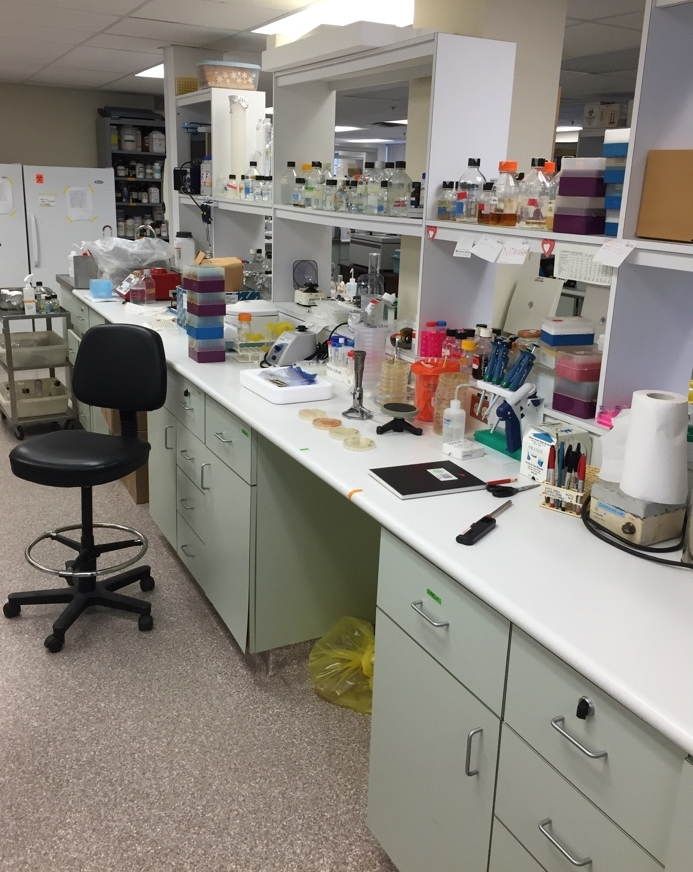 General view of the lab where the experiment was conducted