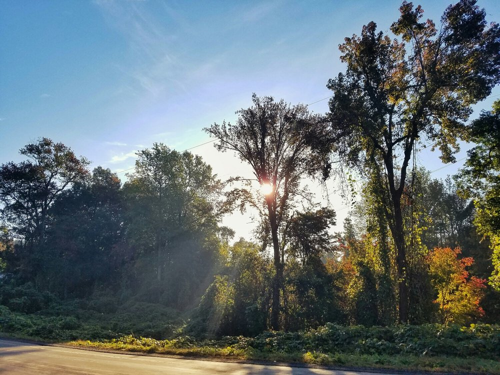 The sun shines through a patch of trees and shrubs beside a road in southern Rowan County NC. Smartphone picture.