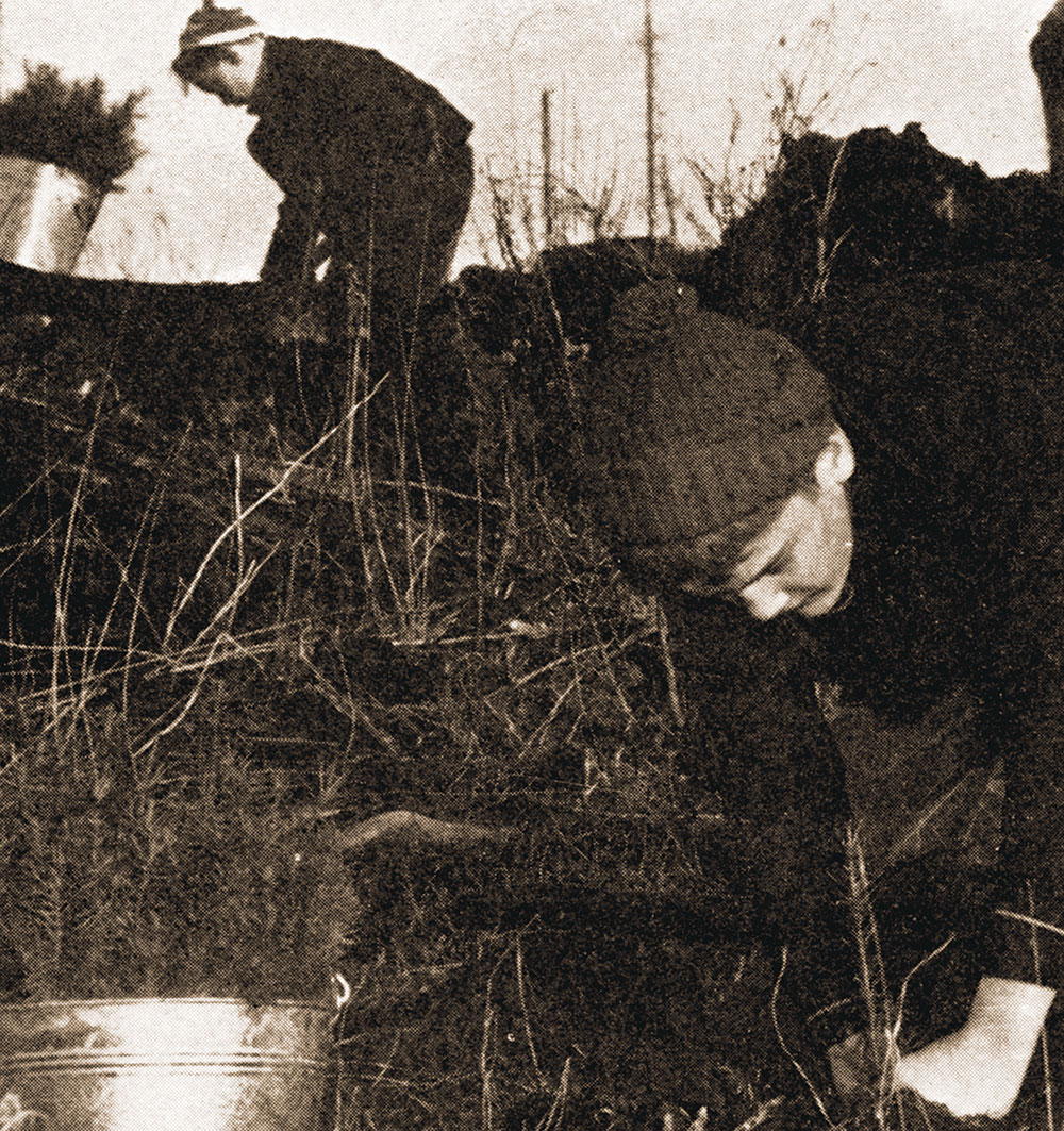Volunteers in 1940 planting trees on a Schafer Brothers Tree Farm. The first tree farm in the US.