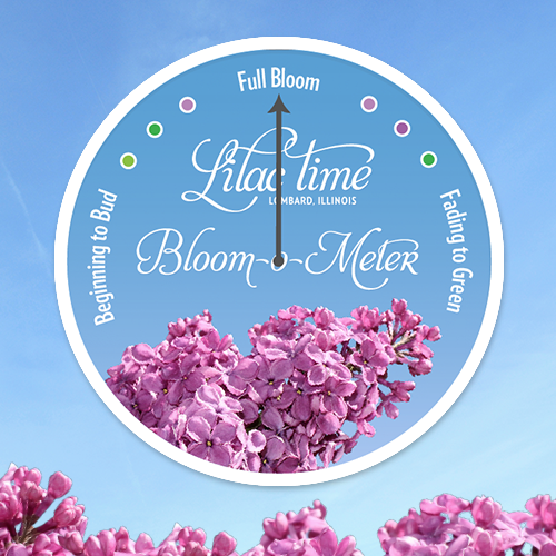 Bloom-o-meter_Graphic-05.png