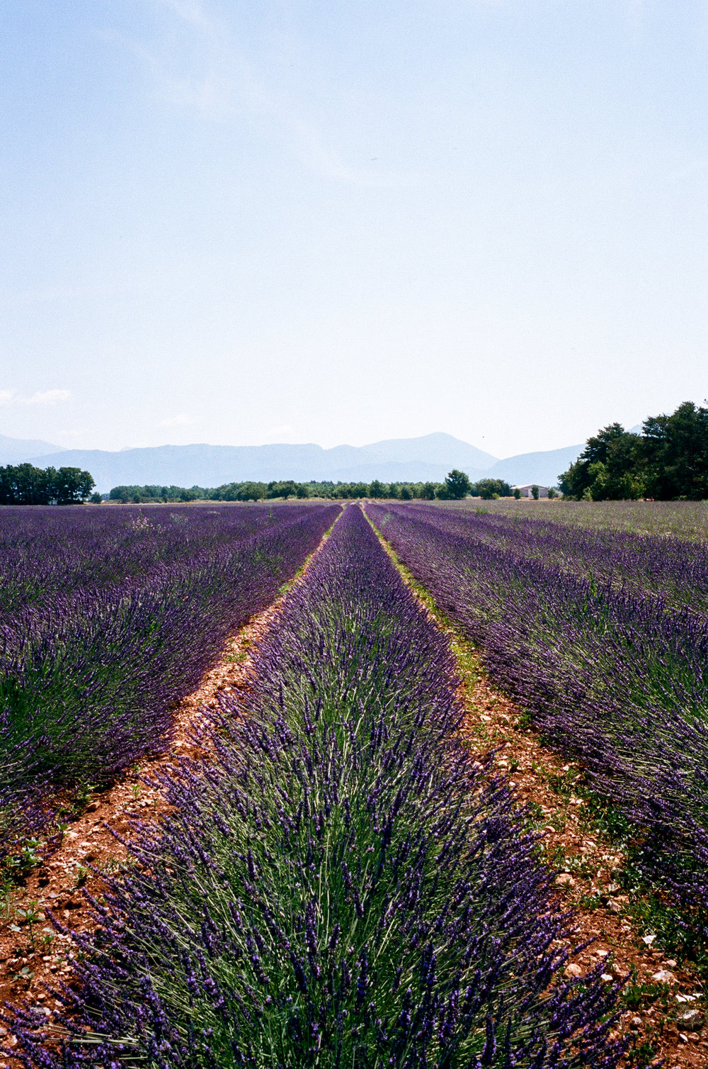 Valensole Plateau. France. 2016.