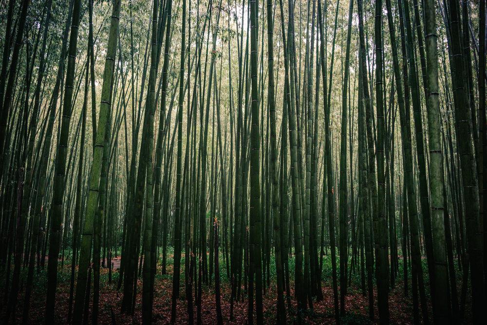 Arashiyama Bamboo Grove, Kyoto. Japan. 2017.