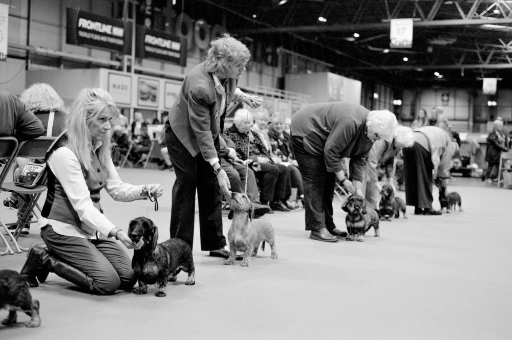 Dachshunds waiting to be judged - Clifford Darby 2019