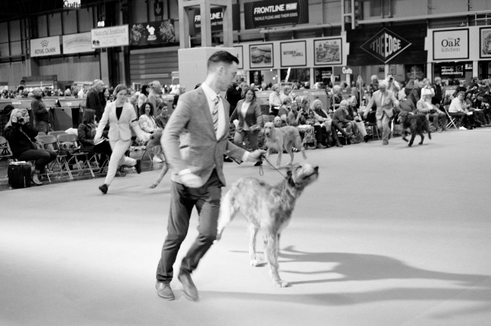 Throughout the event, many dogs will parade their handlers in front of audiences as a sign of gratitude - Clifford Darby 2019