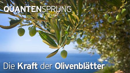 2013_QSP_Oliven_start.jpg