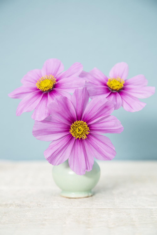 Blume-11.jpg