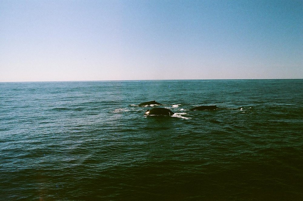 Color film | Pentax | Cape Cod 2016