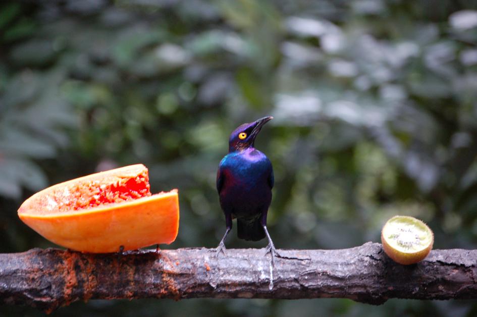 Taken at the Jurong Bird Park, Singapore.