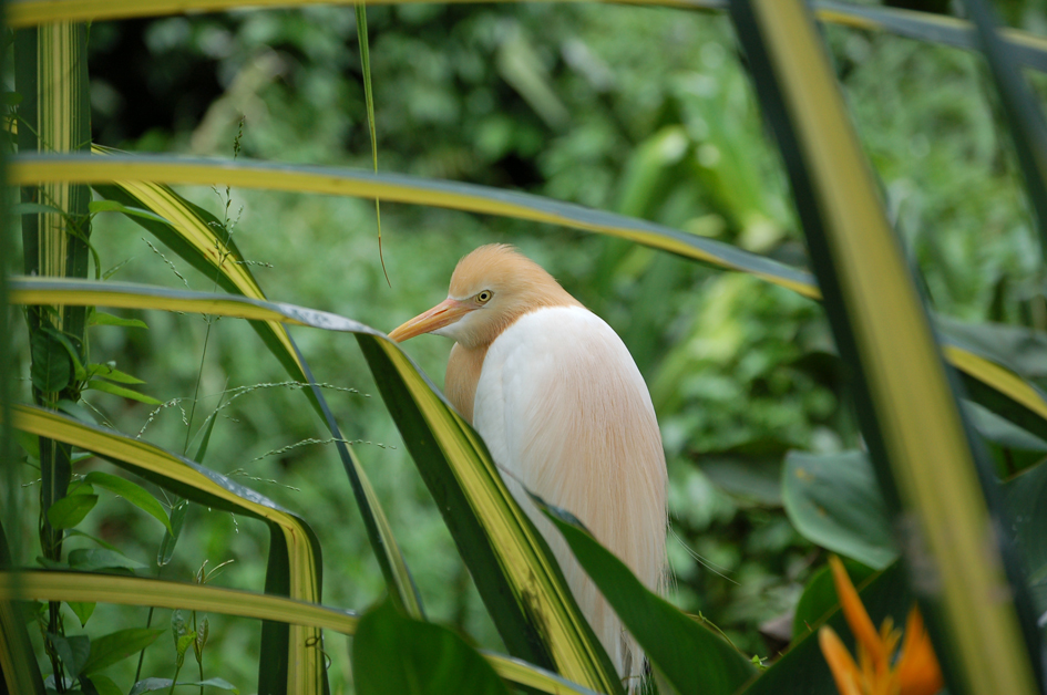 At the Jurong Bird Park, Singapore.