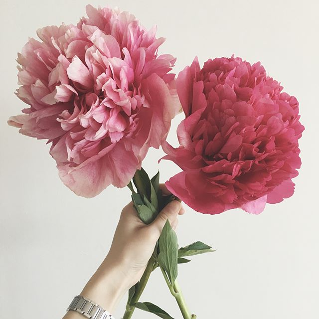 Gigantic peonies making Mondays a lot sweeter. 😱