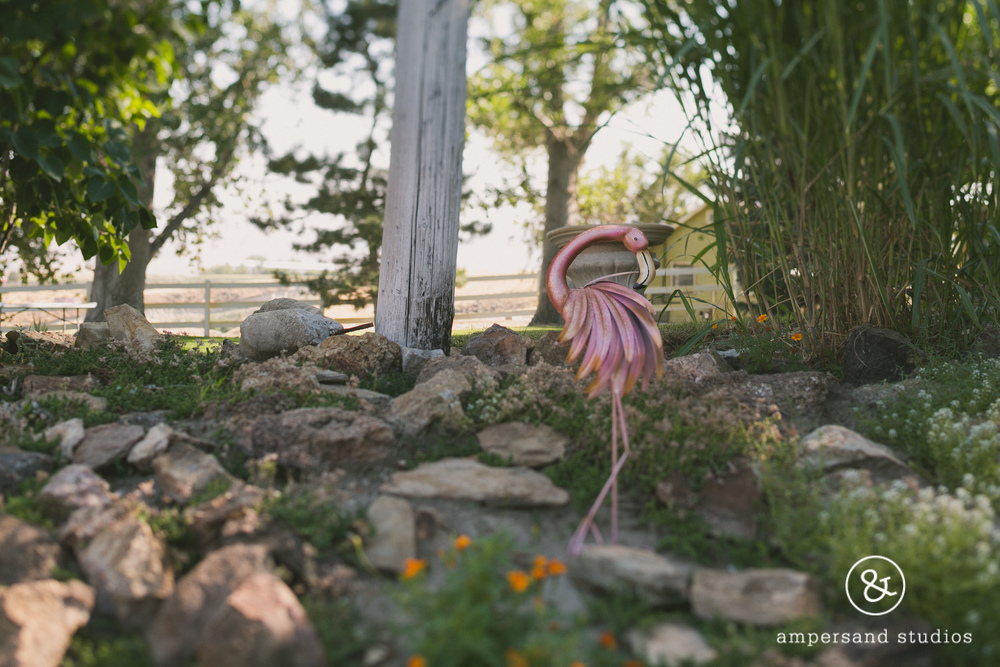 Fox_Canyon_Vineyards_nampa_idaho_wedding_venue_flamingo-135