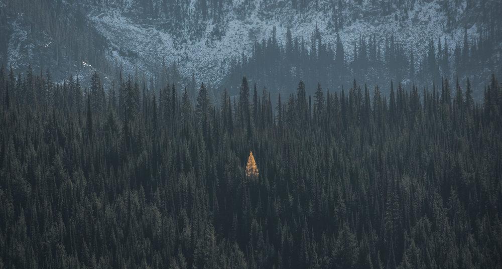 Alone in the woods Peter Lonergan.jpg