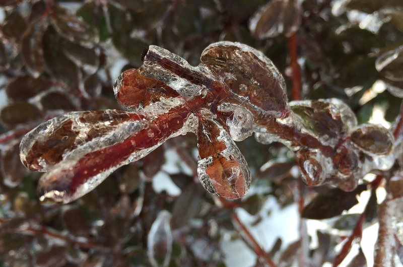iced-branch wands
