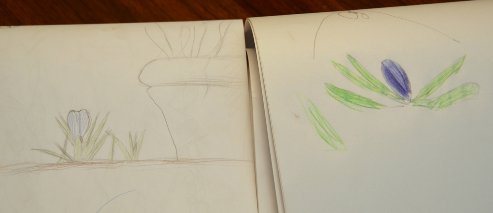 Jack's and Oliver's crocus drawings