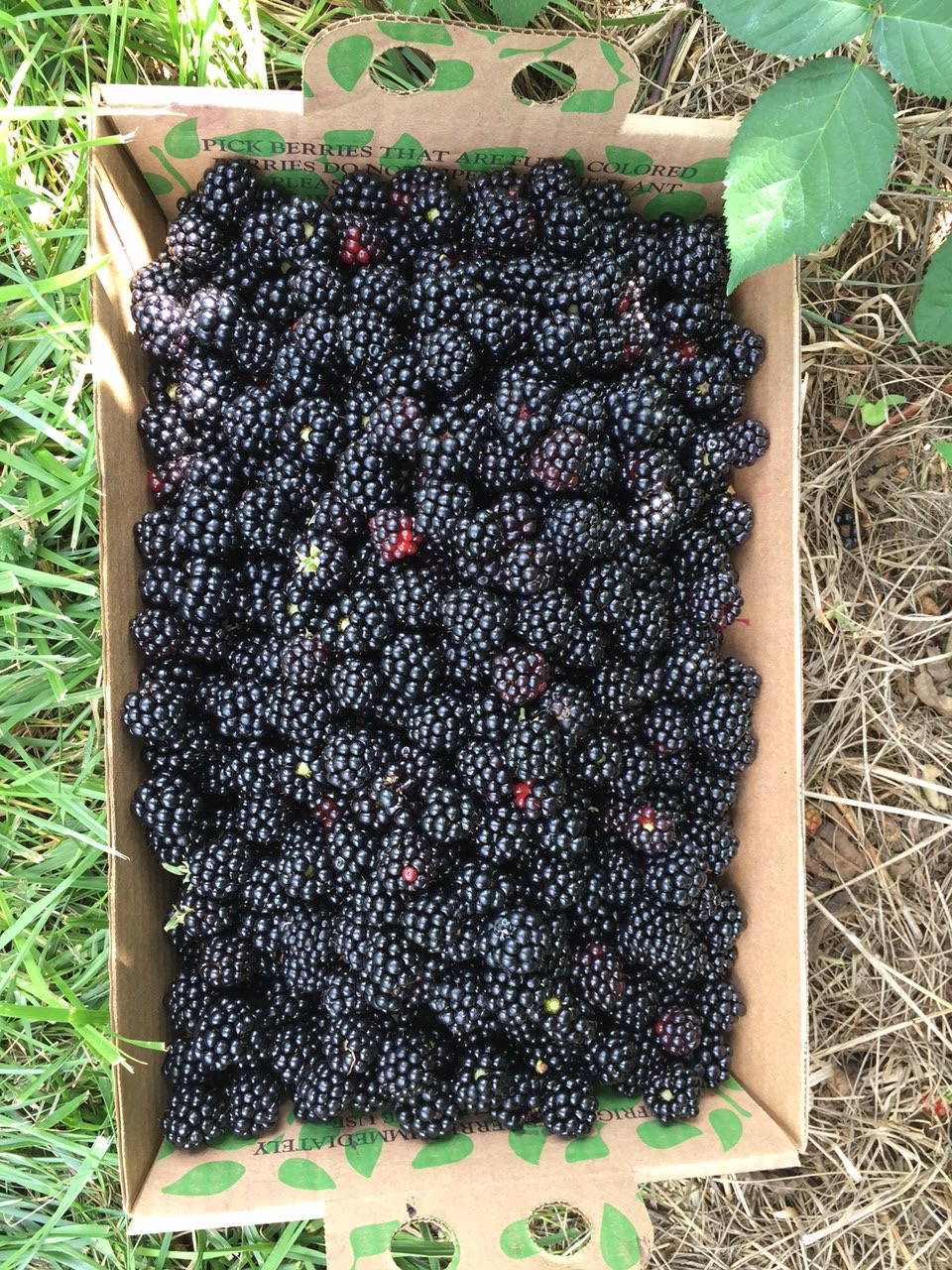 Blackberries or caviar? #nofilter