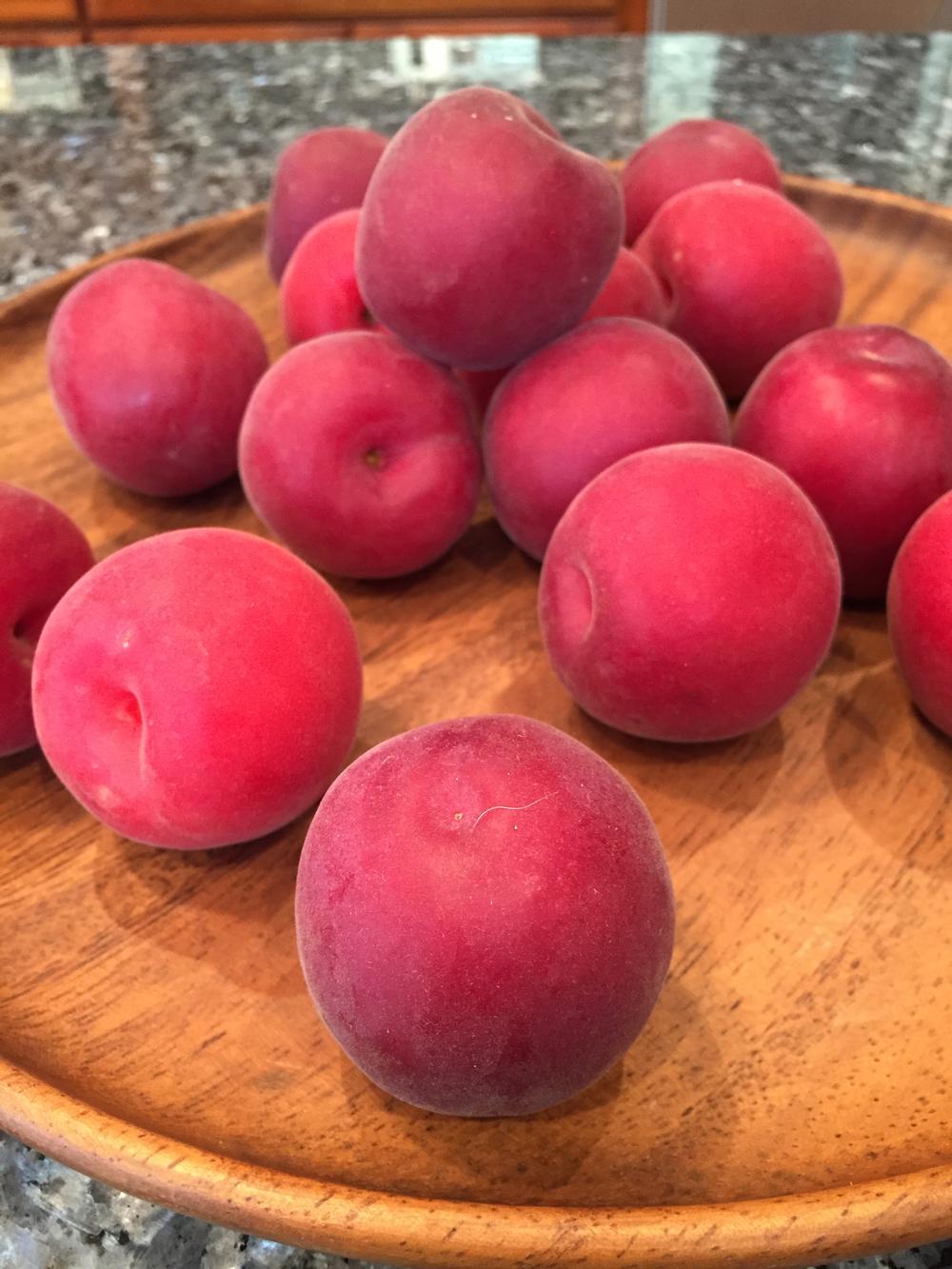 velvet apricots